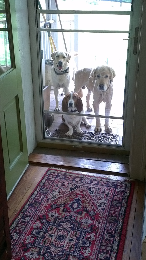 One, two, three wardens guarding our door.
