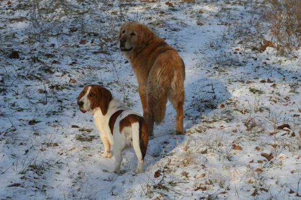 These dogs don't think it is all that cold (but don't tell Laurie). [picture by Xena.]