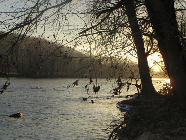 Shenandoah scene (photo by Amy Barley)